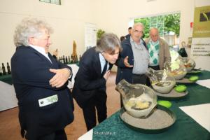 Olio e Dintorni ad Oleis di Manzano